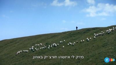 גידי גוב כבשים גורמות לחור באוזון